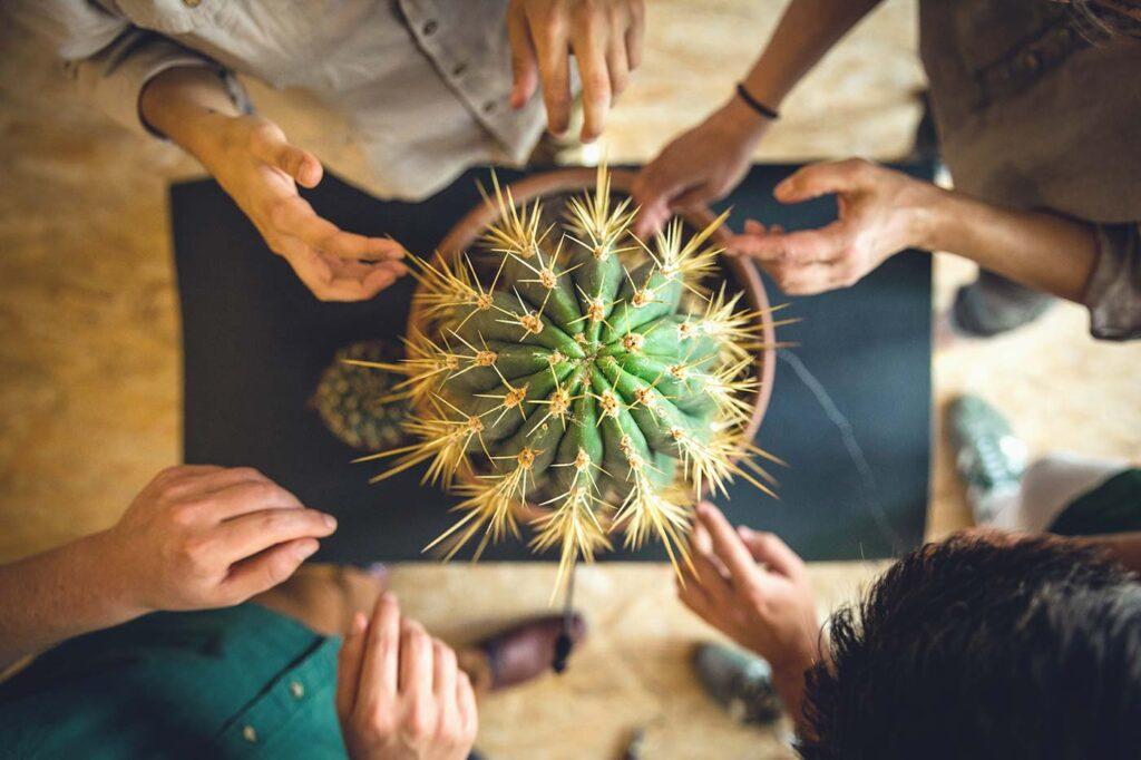 YPP Cactus